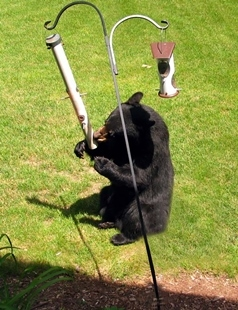 bear-bird-feeder-copy_original_1497454336053.jpg