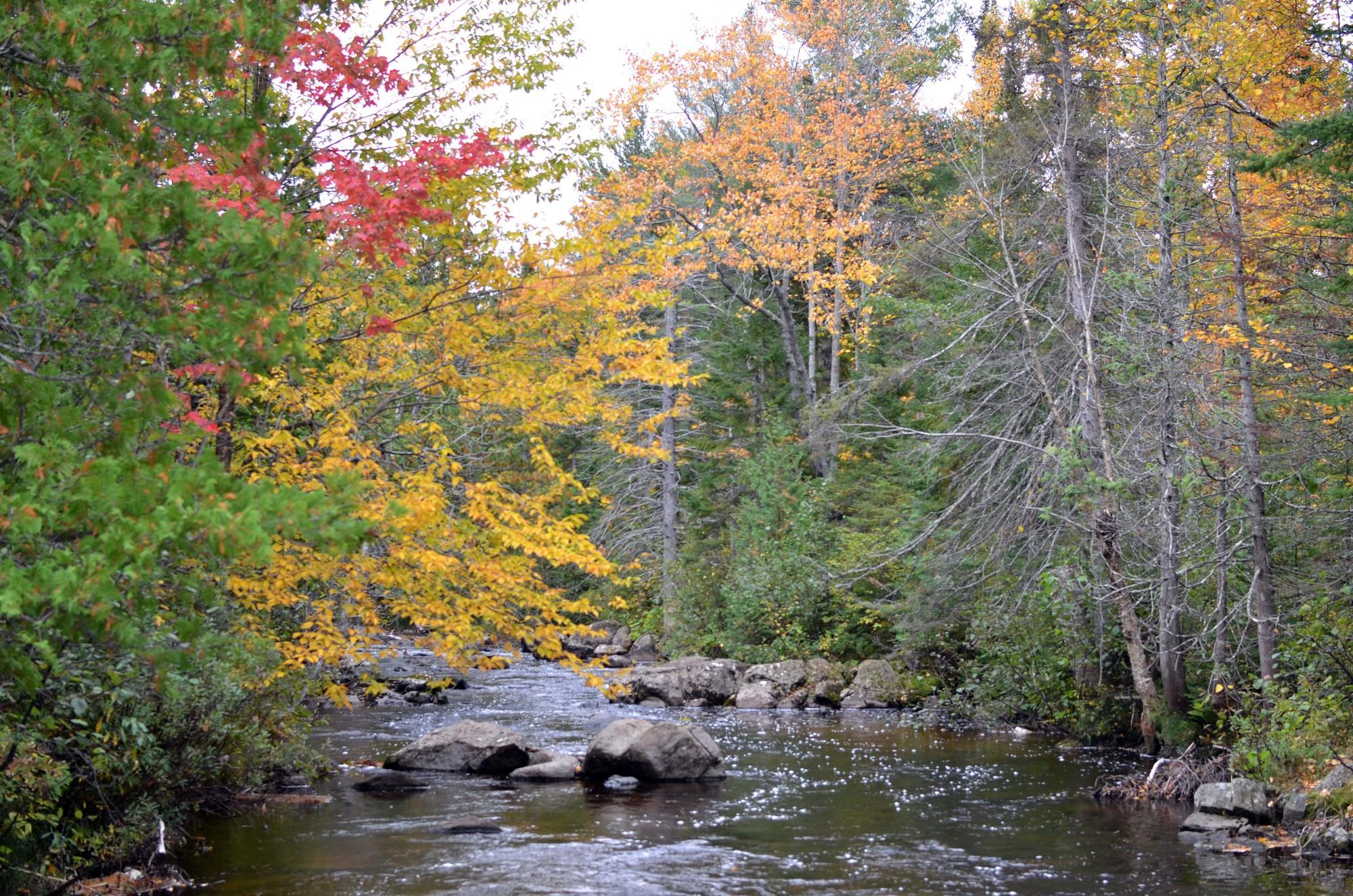Stream in Michigan_1502417425098.jpg