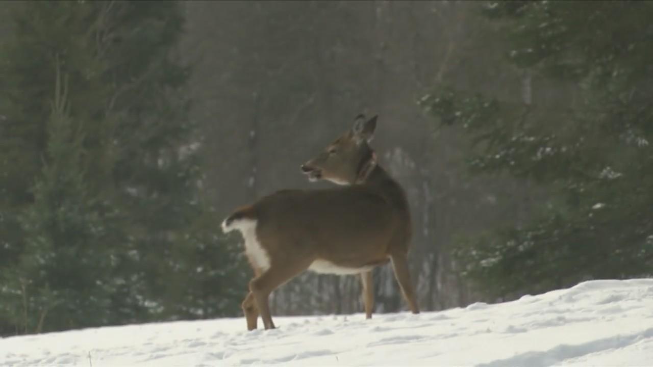 Michigan_DNR_tracking_deer_migration_pat_0_20180126235845
