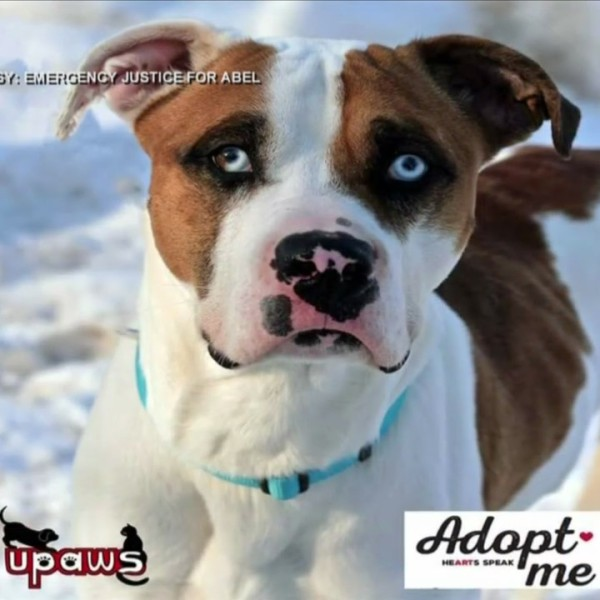 UPAWS_adoption__Abel_s_story_0_20180320221132