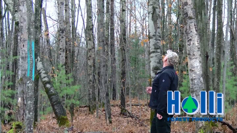 Improving Forest Land for Wildlife Habitat