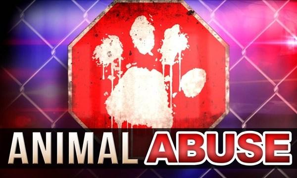 animal abuse_1547652869231.jpg.jpg